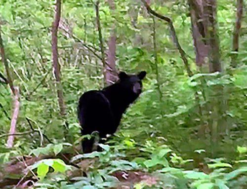 Hiking the AT – Be Still / A Bear / A Rattlesnake / A Spiritual Healer