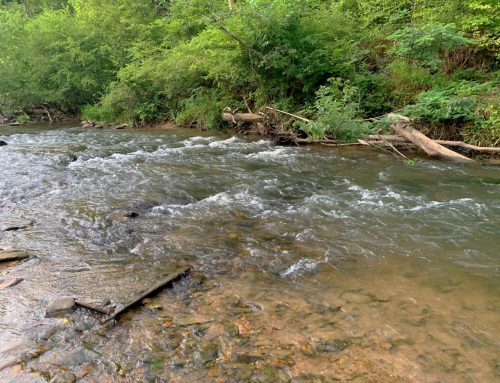 Young Cane Creekfront Lot in Blairsville, GA – SOLD